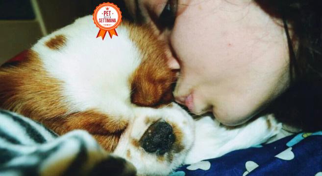 Storia di Nespola, un cucciolo di cavalier king davvero speciale!
