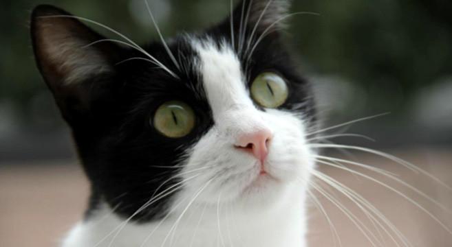 Comportamento del gatto: 5 modi per capire se ti vuole bene ...
