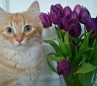 gatto-comportamento-blog