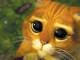 gatto-con-gli-stivali-shrek-copertina