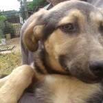 Adozione cucciolo: cerchiamo una famiglia per Jo!