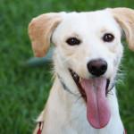 Curiosità sui cani: 5 cose che non gli piacciono [parte II]