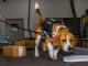 cane-molecolare-lavoro