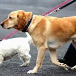 Aggressività tra cani: da cosa dipende?