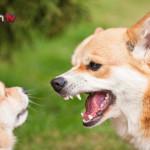 Da cosa dipende l'aggressività tra cani?