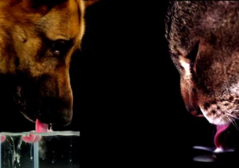 cane-gatto-bere-differenze