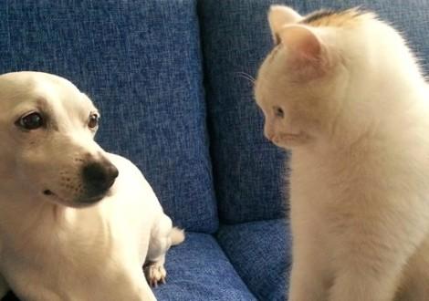 cane-gatto-foto-social-network