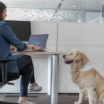 Portare il cane in ufficio fa lavorare meglio: lo dimostra una ricerca