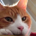 10 cose che (forse) non sapevi sulle lettiere per gatti