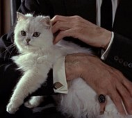 gatto-persiano-james-bond