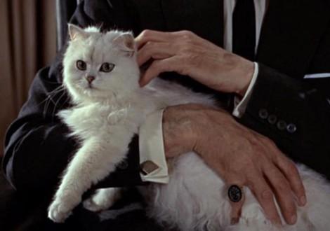 gatto-persiano-james-bond