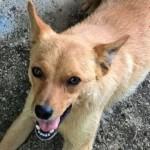 Adozione: cagnolina taglia media in cerca di una casa
