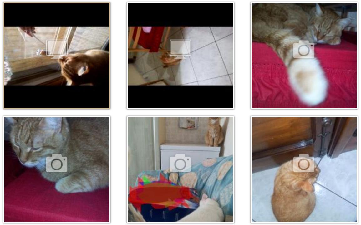 Legolas gatto