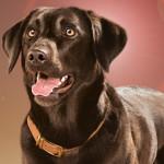 5 modi per capire se il tuo cane è davvero felice