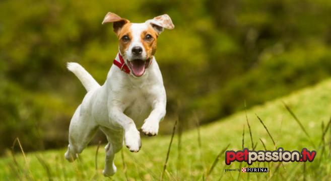 5 modi per capire se il tuo cane è felice