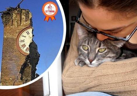 gattino-terremoto-amicizia