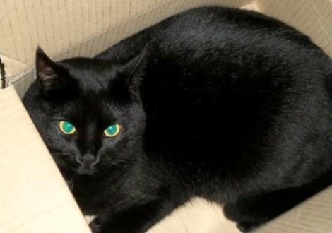 gatto-scatola-curiosita