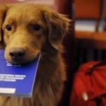 In vacanza: come ottenere il Passaporto Europeo per animali da compagnia