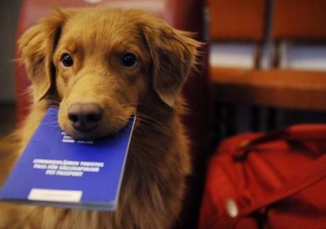 passaporto-cane-cover