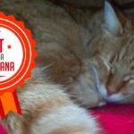 Legolas, la storia di un gattino salvato da una dolce umana