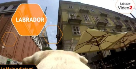 video-gopro-labrador