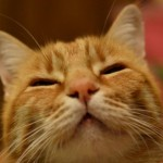 Cosa comunicano le fusa del gatto