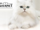 gatto-gourmet-purina-657x360
