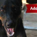 Meticcio di un anno in adozione a Roma: la storia di Gino