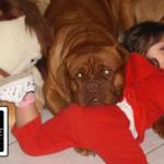 Cane e bambino: guida al primo incontro