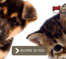 cane-gatto-mancino