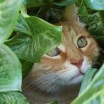 Gatti rossi, arancioni e crema: carattere e personalità