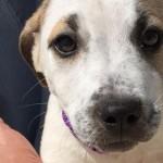Cucciola di tre mesi in adozione al centro nord