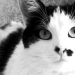 Curiosità: perché i gatti si avvicinano a chi li evita?