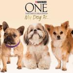 Cani di piccola taglia: approfitta subito del buono sconto Purina ONE My Dog Is…