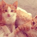 Come introdurre un nuovo gatto in casa se ne avete già uno