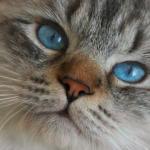 Perché i gatti perdono il pelo? Consigli e rimedi