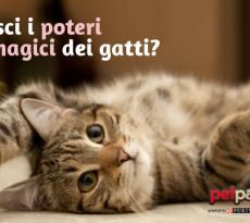 Poteri magici dei gatti