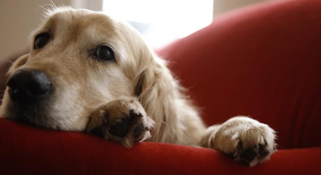 Cani di taglia media: PRO PLAN in promozione su Maxi Zoo ...