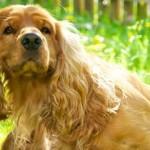 Il prurito del cane: sintomi, cause e rimedi.