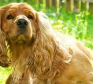 prurito-cane