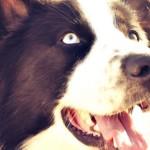 Vista cani: vedono in bianco e nero o a colori?