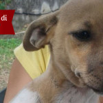 Cucciola di 3 mesi in adozione a Roma, Lulù cerca casa