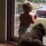 Cane e bimbo impazziscono di gioia per il ritorno del papà [video]