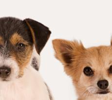 cani-piccola-taglia-blog
