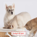 Cane e gatto: scopri le promozioni e le iniziative del mese!