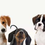Le fasi di crescita del cucciolo di cane dalla nascita a 12 mesi