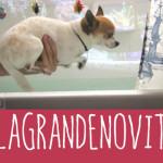 Web serie Nic and Pancho: ecco #lagrandenovità