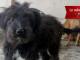 Adozione cucciolo Roma