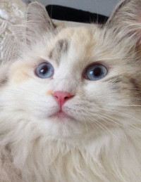 arya-gatto