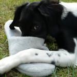 """Addestramento del cane: importanza del comando """"NO!"""""""
